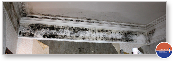 Condesation causing black mould growth solutions