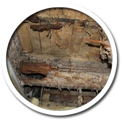 Dry Rot Wet Rot Specialists Cork Tipperary