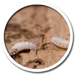 Woodworm Treatment Cork Tipperary